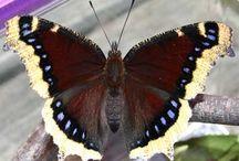 Butterflies and Moths / by lou pierce