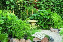 Garden / by Willow Forrestall