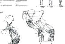 legs-anatomy