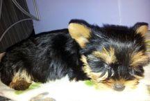 Gru, my little dog  / Gru, my little dog