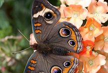 Butterfly / by Dick En Anita Hulst
