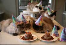 Cat Party / by Marilyn Andrews