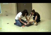 Dog Video Tutorials