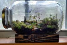 Plants Ecosystem