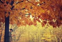 Fall Season / I hope and I pray that someday I can breath this season. <3