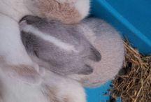 Moustache's life / Moustache : lapin nain, né le 22 mars 2014 en corse.