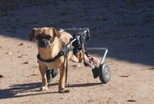 The life and love of the special needs... / Showing that special needs animals can still have a quality of life, they just need a little help...