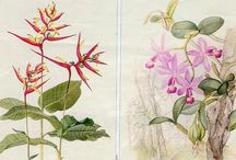 Botanical illustrations. / Margaret Mee, Karla Beatty, Mary Harden, Barbara Steinberg, Riziki Kateya, Georg Dionysius Ehret, Pōhutukawa , William Curtis,  Pierre Joseph Redoute, John Day, Kaye Hurtt, Sydney Parkingson and others. / by Adriana Peixoto