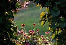 mdसुंदर बगीचा