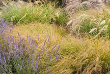 Landscape gardens, Prairie Gardens (Táj a kertben és préri kertek)