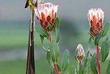 African Safari Bird Lovers