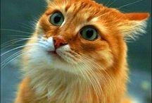 rode kat / tekenvoorbeeld
