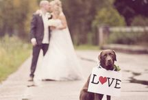 Trouwfoto's met je hond!