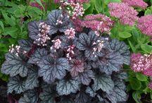 Garden Flower & Patio Ideas