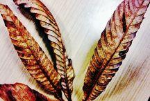 Leaf &Yaprak