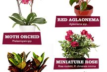 Top 5 Difficult-But-Worth-It Houseplants