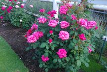 my blomme