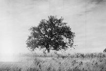 Tree's - 120film