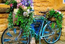 Yard Bicycles / by Joy Johnson