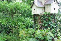 'Gotta-Have' Birdhouses / by Tobi Luft