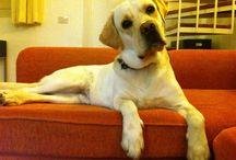 La Biblioteca di Pepe / Qui potrete trovare le informazioni sulla Libreria di Pepe, il mio Labrador, che aspira a diventare un cane da lettura. E sui libri recensiti da noi e dai nostri amici blogger.