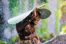 Wonders of nature, intelligent Animals