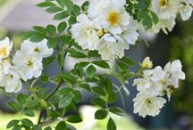jardines con olor