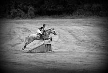 Just Horses!