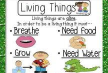 grade 1 needs of living things