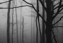 Nature - Fog and Mist