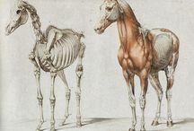 Anatomy Animals