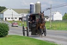 Livin' in an Amish Paradise / by Jen Smith Keller