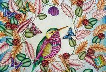 Coloring Books - Animal Kingdom