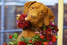 Flowers for Pets