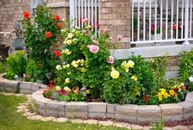 Lawn & Garden / Tips, tricks and projects to make your lawn and garden the envy of the neighborhood. / by Blain's Farm & Fleet