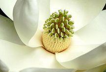 istanbul merter çiçek 05076903030