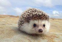 Inspiration - So Cute - Hedgehogs