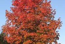 Rula's Garden in Fall / Autumn is my favorite season. Enjoy fall photos taken in my own backyard.