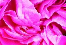 Roses / by Sara Venn