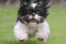 cachorro veloz e agitado✌