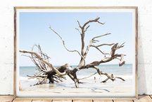 Coastal Ocean Prints / Tropical Beaches and Rural Coastal Decor