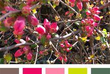 Virágaim - My Flowers