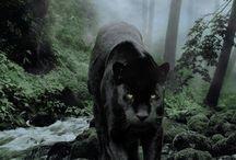 Black Panthers ❤️❤️