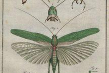 자료-곤충