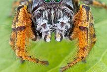 buggy bug bugs
