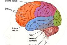 How the brain works - Anoxic brain injury - hjerneskade - ABI