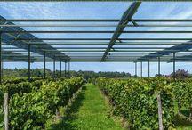 serre photovoltaique