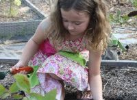 Community Gardening / Improves the quality of life for people involved with the garden, produces nutritious and delicious food and so much more.