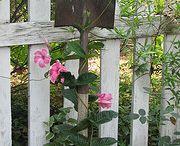My Secret Garden / by Elaine Canaday