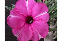 Blog Mais Plantas / Dicas, imagens, videos e curiosidades sobre flores, plantas, gramados e jardins.